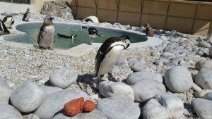 3d-druck-figur-bei-pinguinen-1024x576